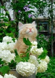 Cat and flowers_n